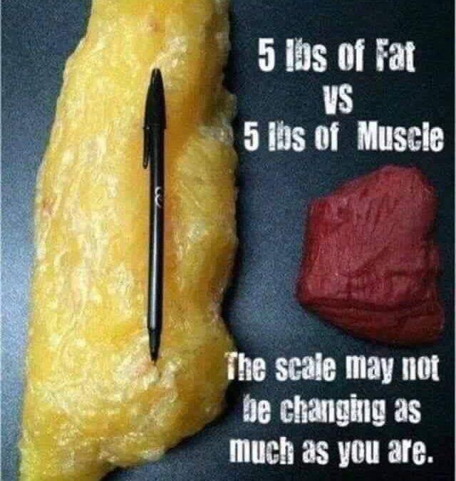 5 dingen die je niet wist over spieren en vet